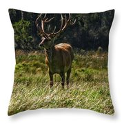 New Zealand Elk Throw Pillow