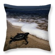 Newly Hatched Leatherback Turtle Throw Pillow