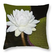 Nocturnal Blossom Of Victoria Lily Throw Pillow