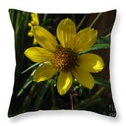 Nodding Bur Marigold Throw Pillow
