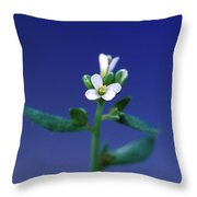 Normal Arabidopsis Plant Throw Pillow