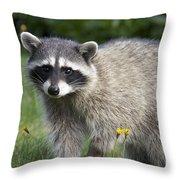 North American Raccoon Throw Pillow