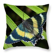 North Queensland Day Moth Alcides Throw Pillow