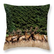Northcoast Elk Along The 101 Throw Pillow