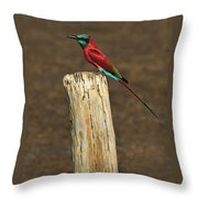 Northern Carmine Bee-eater Throw Pillow