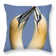 Northern Gannet Morus Bassanus Pair Throw Pillow