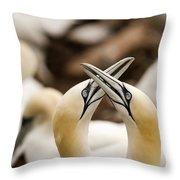Northern Gannets Morus Bassanus Rubbing Throw Pillow