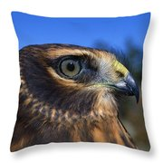 Northern Harrier Raptor In Profile Throw Pillow