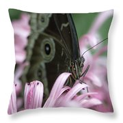 Northern Pearly-eye On Pink Throw Pillow