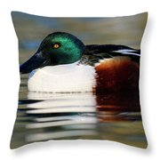 Northern Shoveler Anas Clypeata Male Throw Pillow