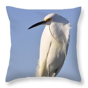Not Ruffled Throw Pillow
