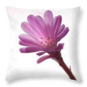 Notocactus Herderii Flower Throw Pillow