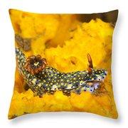 Nudibranch On Sponge Throw Pillow