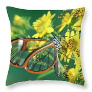 Nymphalid Butterfly Pteronymia Sp Throw Pillow