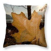 Oak Leaf In Backlight Throw Pillow