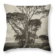 Oak Trees Throw Pillow