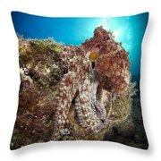 Octopus Posing On Reef, La Paz, Mexico Throw Pillow