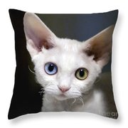 Odd-eyed Kitten Throw Pillow