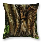 Old Fig Tree Throw Pillow by Kaye Menner