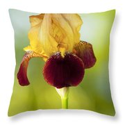 Old Time Two Toned Burgundy And Gold Iris Throw Pillow