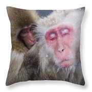 Older Snow Monkey Being Groomed By A Throw Pillow