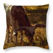 Older Texas Long Horn  Throw Pillow