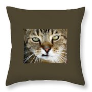 Oliver The Cat Throw Pillow