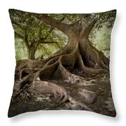 Ombu In Buenos Aires Throw Pillow