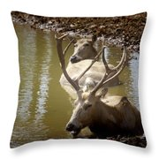 On A Hot Summers Day Throw Pillow