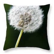 One Dandelion Flower Isolated  Throw Pillow