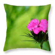 One Of The Phlox Throw Pillow