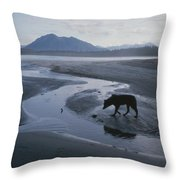 One Of Vargas Islands Habituated Wolves Throw Pillow