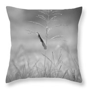 One Tall Blade Of Grass On A Foggy Morn - Bw Throw Pillow