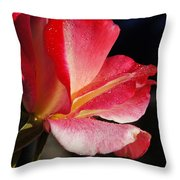 Open Rose After The Rain Throw Pillow