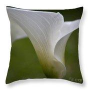 Open White Calla Lily II Throw Pillow