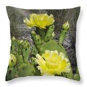 Opuntia Opuntia Sp Cactus Flowering Throw Pillow