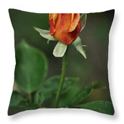 Orange And Yellow Rose Throw Pillow