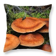 Orange Beauty Throw Pillow