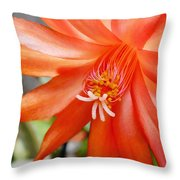 Orange Cactus Throw Pillow