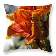 Orange Day Lilies In The Sun Throw Pillow