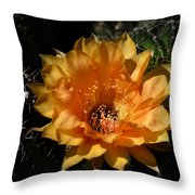 Orange Echinopsis Flower  Throw Pillow