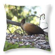 Orange Footed Scrub Fowl Throw Pillow