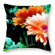Orange Gerber Daisies Throw Pillow