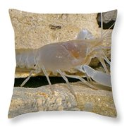Orange Lake Cave Crayfish Throw Pillow