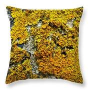 Orange Lichen - Xanthoria Parietina Throw Pillow