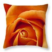 Orange Rose Close Up Throw Pillow