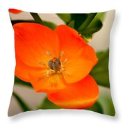 Orange Star   Throw Pillow