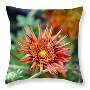 Orange Starburst Throw Pillow