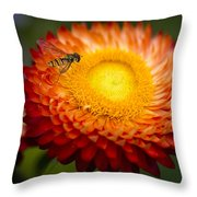 Orange Straw Flower With Guest Throw Pillow