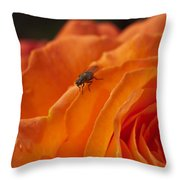 Orange With Visitor Throw Pillow